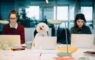 Plan de negocio para montar un centro de coworking