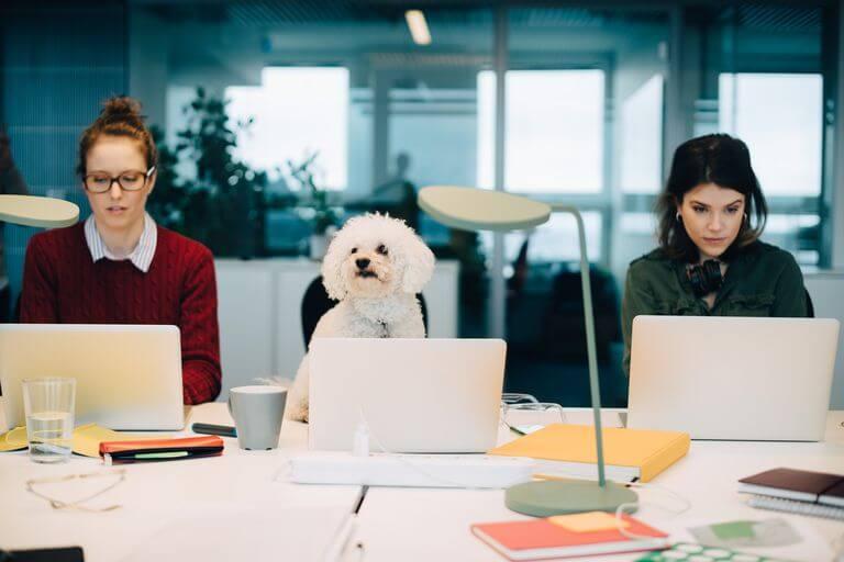 plan de negocio centro de coworking